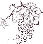 Grape Clipart Royalty Free. 18,804 grape clip art vector EPS ...