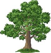 Oak tree Clipart Vector Graphics. 9,950 oak tree EPS clip art ...