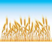 Wheat Clipart Illustrations. 22,425 wheat clip art vector ...