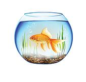 Fish tank Stock Illustrations. 825 fish tank clip art images and ...