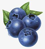 Blueberries Illustrations and Clip Art. 388 blueberries royalty free ...